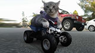 太萌了!猫咪出演《速度与激情》