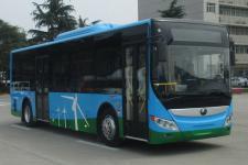 10.5米|20-39座宇通纯电动城市客车(ZK6105BEVG25A)